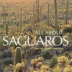 All About Saguaros